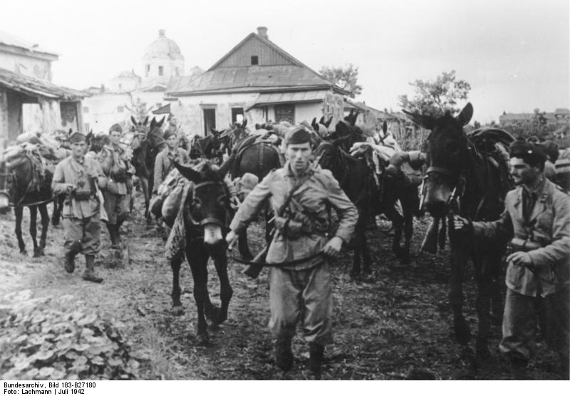 Italian Soldiers with Mules in the USSR